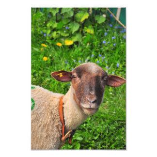 Lamb Photo Art