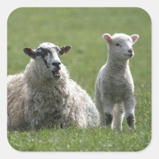 Lamb Square Sticker