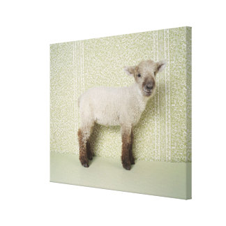 Lamb Standing Indoors, and Floral Wallpaper Canvas Print