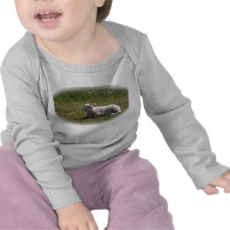 lamb tee shirts
