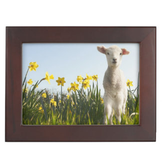 Lamb walking in field of flowers keepsake box