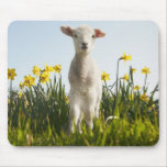 Lamb walking in field of flowers mouse pad