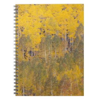 Lambert Hollow, aspen trees 2 Notebook