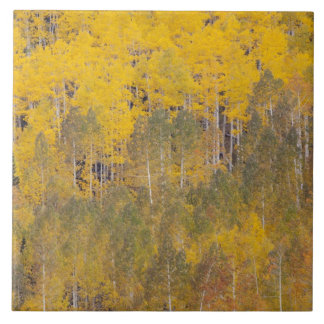 Lambert Hollow, aspen trees 2 Tile