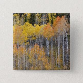 Lambert Hollow, aspen trees 3 15 Cm Square Badge