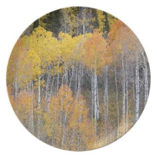 Lambert Hollow, aspen trees 3 Dinner Plates