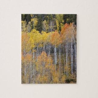 Lambert Hollow, aspen trees 3 Jigsaw Puzzle