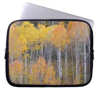 Lambert Hollow, aspen trees 3 Laptop Sleeve