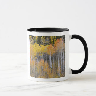 Lambert Hollow, aspen trees 3 Mug