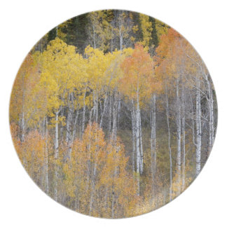 Lambert Hollow, aspen trees 3 Plate