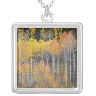 Lambert Hollow, aspen trees 3 Silver Plated Necklace