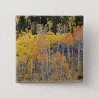 Lambert Hollow, aspen trees 4 15 Cm Square Badge