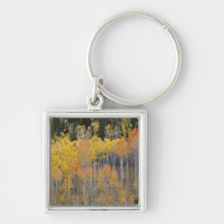 Lambert Hollow, aspen trees 4 Key Ring
