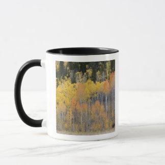 Lambert Hollow, aspen trees 4 Mug