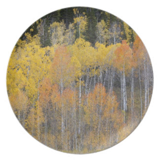 Lambert Hollow, aspen trees 4 Plate