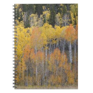 Lambert Hollow, aspen trees 4 Spiral Notebook