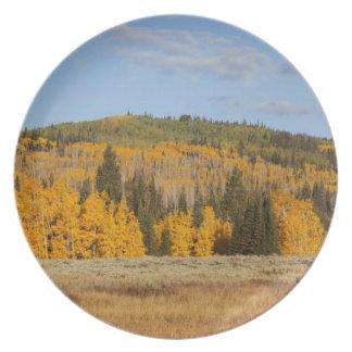 Lambert Hollow, aspen trees Plate