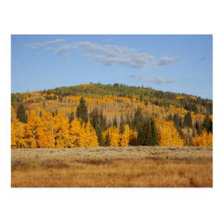 Lambert Hollow, aspen trees Postcard