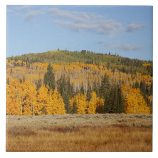 Lambert Hollow, aspen trees Tile