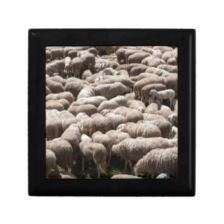 lambs and sheep in the flock in the mountains gift box