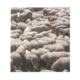 lambs and sheep in the flock in the mountains notepad