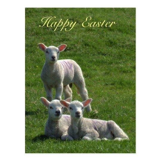 Lambs Easter Postcard