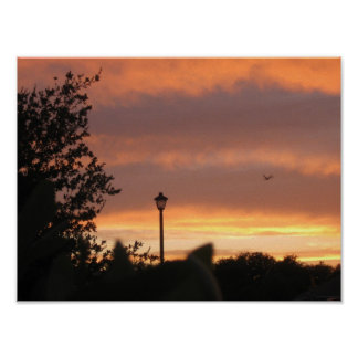 Lamp Post and Bird Poster