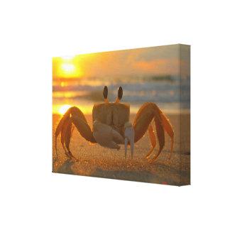 Land Crab at Sunset Canvas Wrap