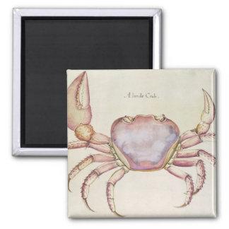 Land Crab Square Magnet