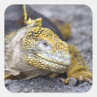 Land Iguana Square Sticker