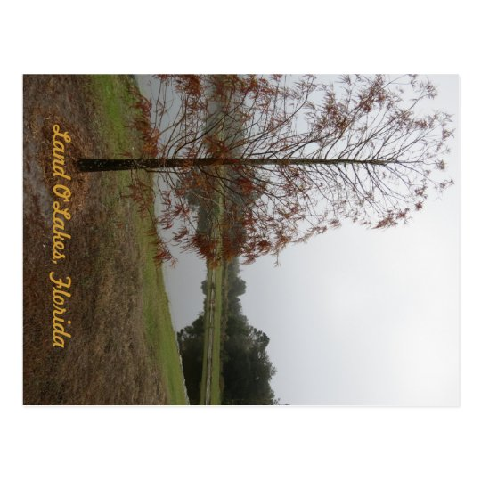 "Land O""Lakes Lake Scene Postcard"