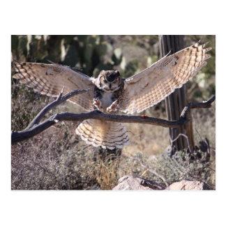 Landing Great Horned Owl Postcard
