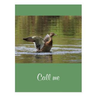 Landing Mallard Postcard