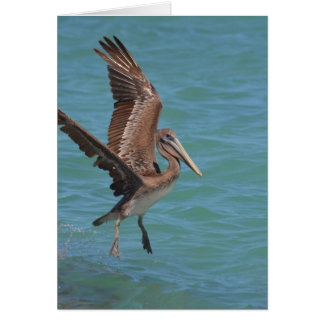 Landing Pelican Greeting Card