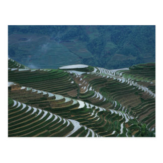 Landscape of rice terraces in the mountain, 2 postcard