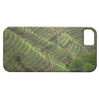 Landscape of rice terraces in the mountain, barely there iPhone 5 case