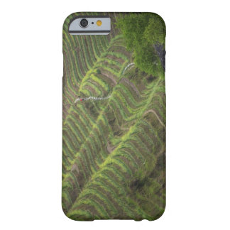 Landscape of rice terraces in the mountain, barely there iPhone 6 case