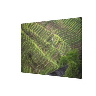 Landscape of rice terraces in the mountain, canvas print