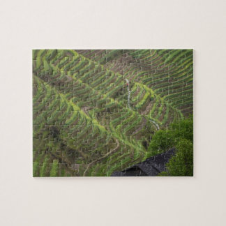 Landscape of rice terraces in the mountain, jigsaw puzzle