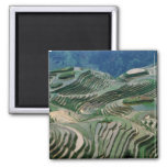 Landscape of rice terraces in the mountain, fridge magnet