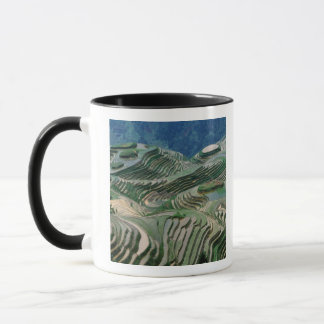 Landscape of rice terraces in the mountain, mug