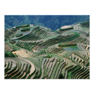Landscape of rice terraces in the mountain, photo print