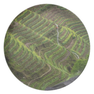 Landscape of rice terraces in the mountain, plate