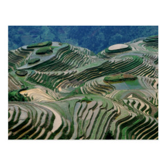 Landscape of rice terraces in the mountain, postcard