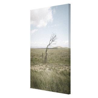 Landscape, Texas, USA Canvas Print