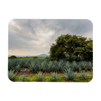 Landscape With Blue Agave Rectangular Photo Magnet