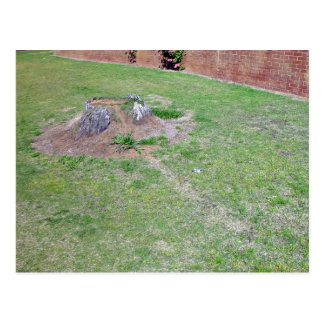 Landscaping Ideas to Cover a Tree Stump Postcard