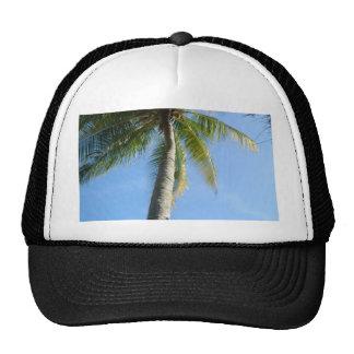 Langkawi Palm Cap, Malaysia Collection Cap