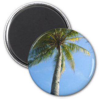 Langkawi Palm Magnet, Malaysia Collection Magnet