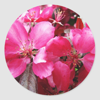 Language of Flowers Pink Apple Blossom Preference Round Sticker